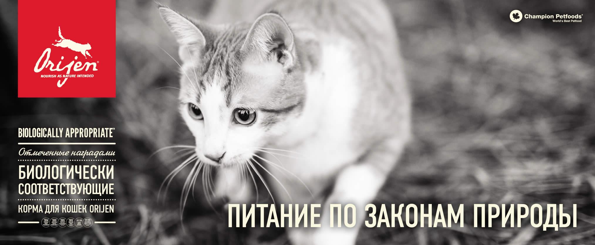 КОРМ ДЛЯ КОШЕК ORIJEN FIT&TRIM - YouTube